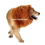 cosplay-wig-pet-lion-dog